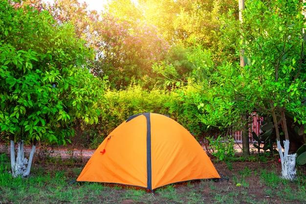 Апельсиновая палатка среди апельсиновых деревьев под ярким солнцем