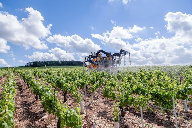 Orange tractor cultivate field, spraying vineyard with fungicide, sprinkles pesticides among rows of vineyards