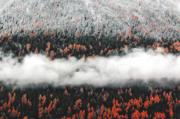 Orange trees landscape with fog