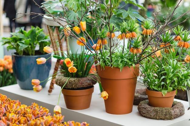 오렌지 튤립과 꽃 냄비에 프리미어 또는 크라운 임페리얼로도 알려진 fritillaria imperialis