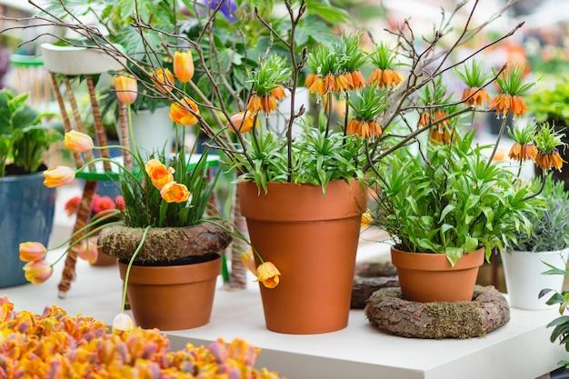 植木鉢のオレンジ色のチューリップとバイモ