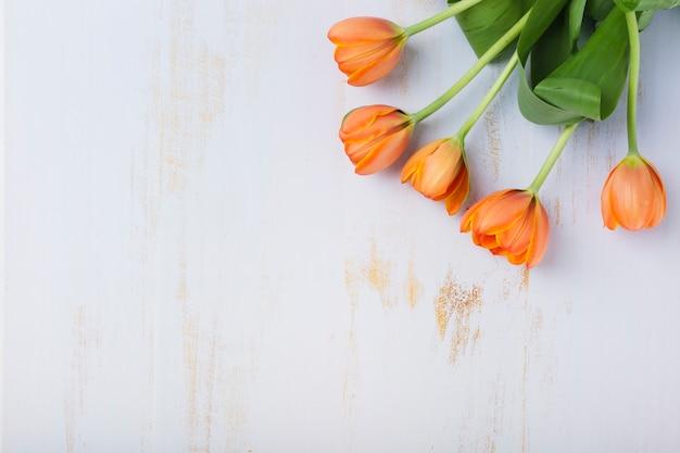 An orange tulips on textured white background