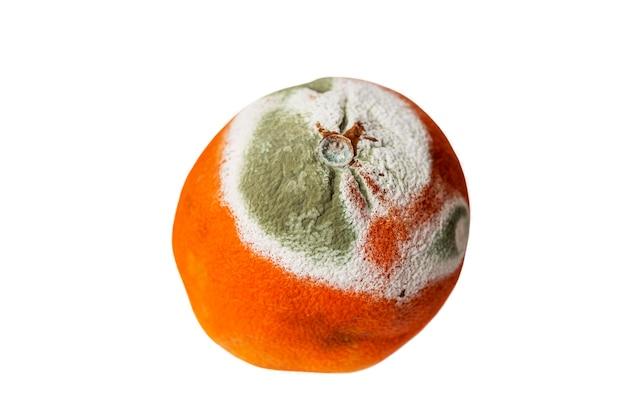 오렌지색과 녹색 곰팡이.
