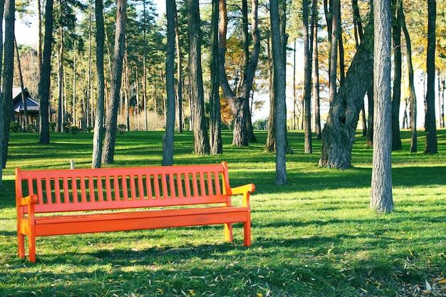 화창한 날 공원에서 오렌지 나무 벤치
