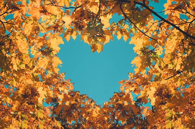 Orange and yellow leaves in heart shape
