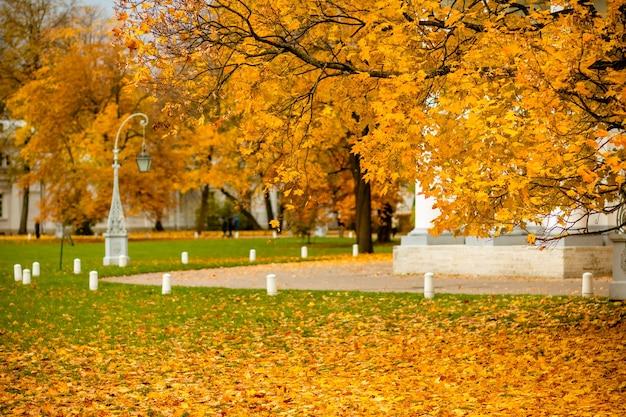 秋の公園でオレンジ色の黄色のカエデの葉