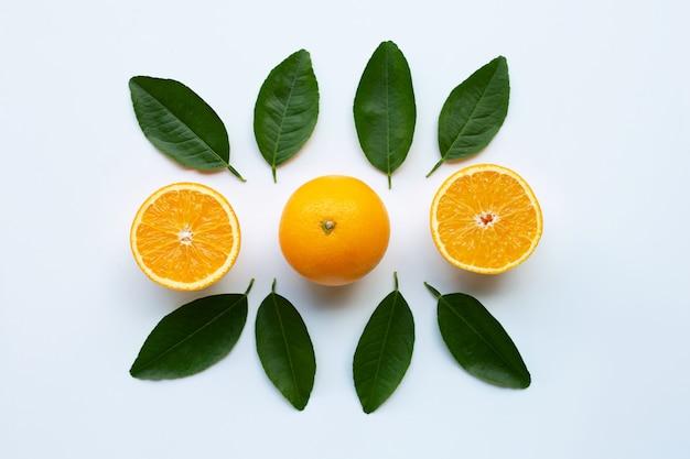 오렌지와 흰색 바탕에 녹색 나뭇잎입니다.