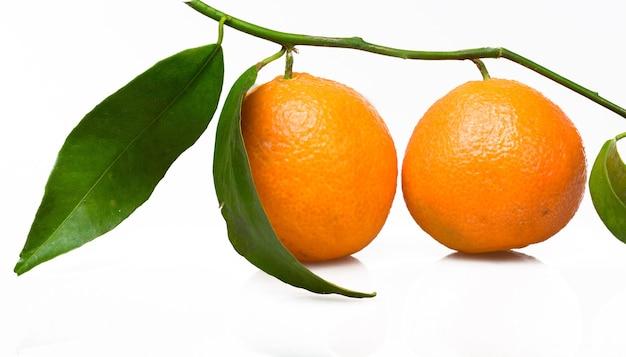 나뭇가지에 잎이 달린 오렌지