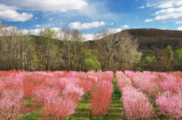 Садовая ферма. ряды деревьев. состав природы.