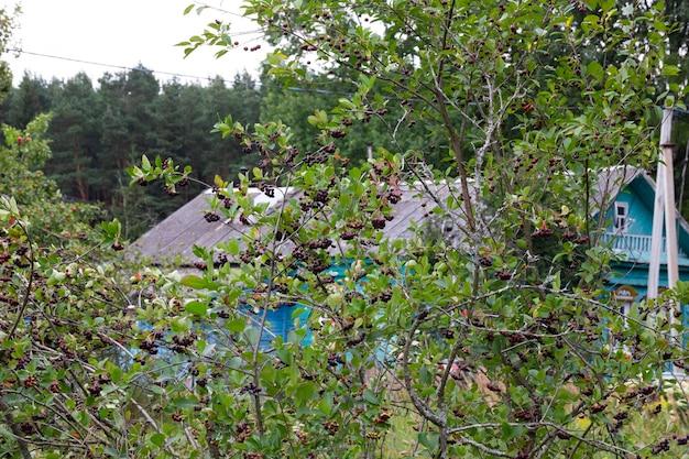 마을 집과 숲이 있는 배경의 과수원