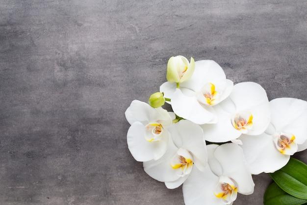 Орхидеи и спа-камни на каменном фоне. спа и оздоровительная сцена.