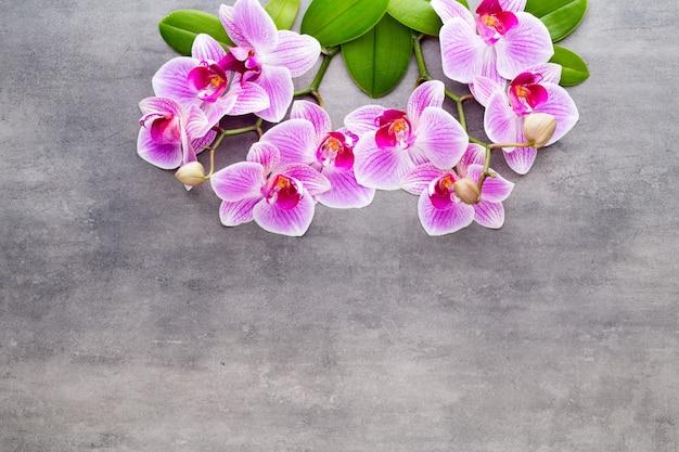 Орхидеи и спа-камни на каменном фоне. спа и оздоровительный центр.