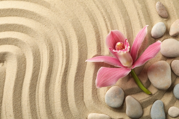 蘭と砂の背景に石