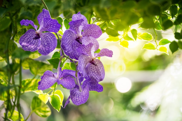 Orchid on blurred background