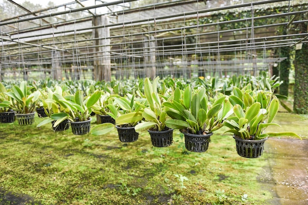 Ферма орхидей с цветочными горшками орхидей