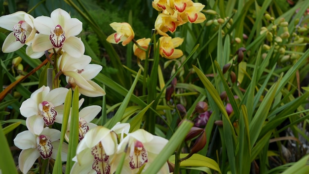 Цветок орхидеи расцветает в зеленых листьях. элегантный красочный цветочный цветок. экзотические тропические джунгли, тропический лес, ботаническая атмосфера. естественный сад яркой зелени райской эстетики. декоративное цветоводство