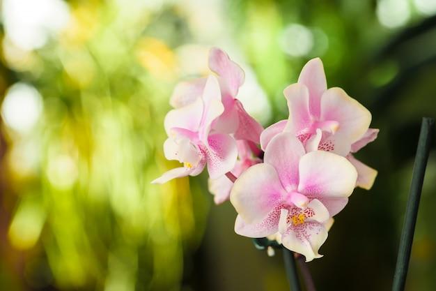 蘭の花の花は、背景をぼかした写真にクローズアップ。植物園