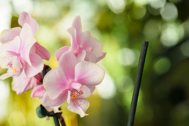蘭の花の花をクローズアップ