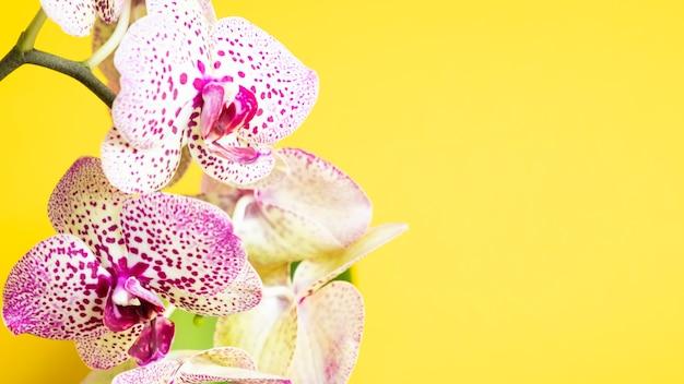 복사 공간 난초 꽃 근접 촬영