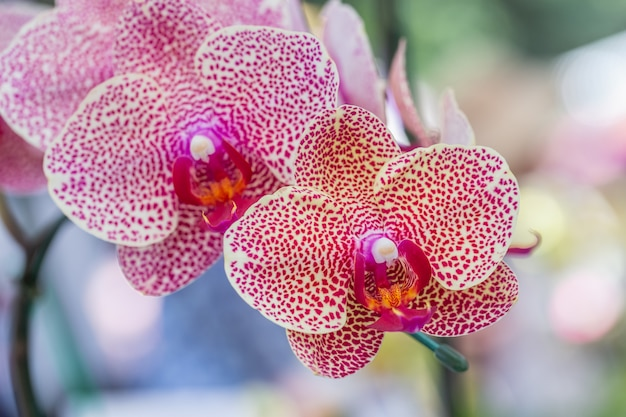 Orchid flower in garden at winter or spring day.