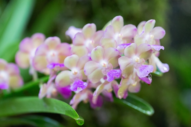 겨울 또는 봄 날에 난초 정원에서 난초 꽃.