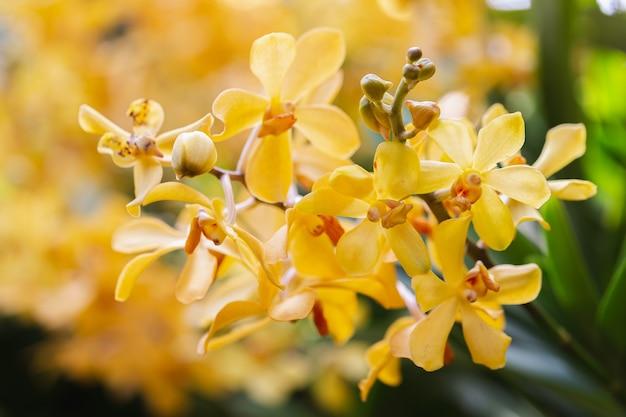 난초 정원에서 난초 꽃