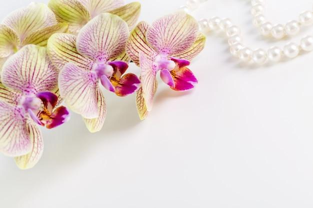 白い背景の上の蘭の花。スペースをコピーします。