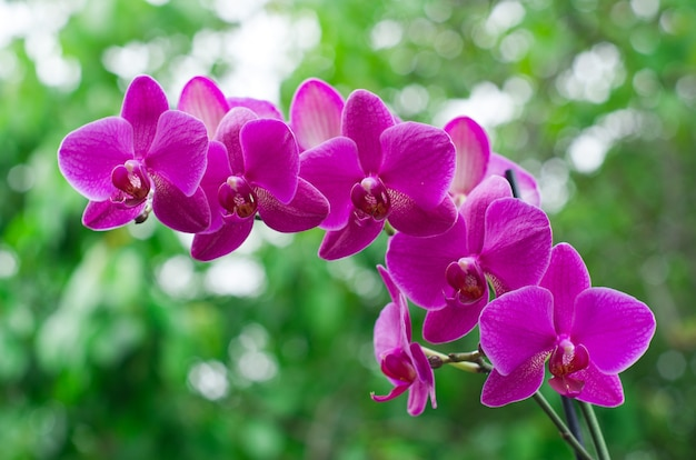 緑の自然の蘭の花