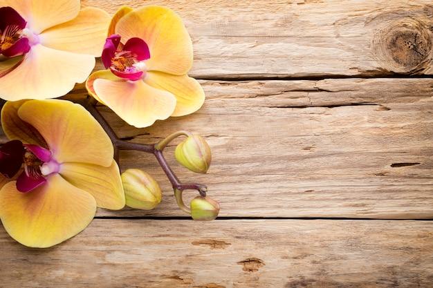 木製の背景の蘭の花。