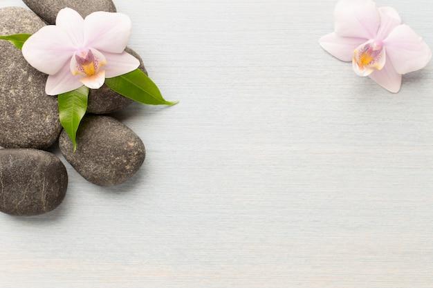 스파 돌 나무 배경에 난초 꽃입니다.