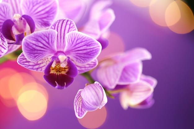 Цветок орхидеи. фиолетовая орхидея макрос на фиолетовом фоне