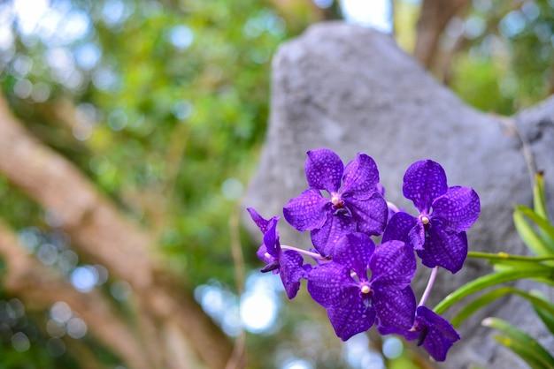 Orchidea fiore su albero contro sfondo della natura.