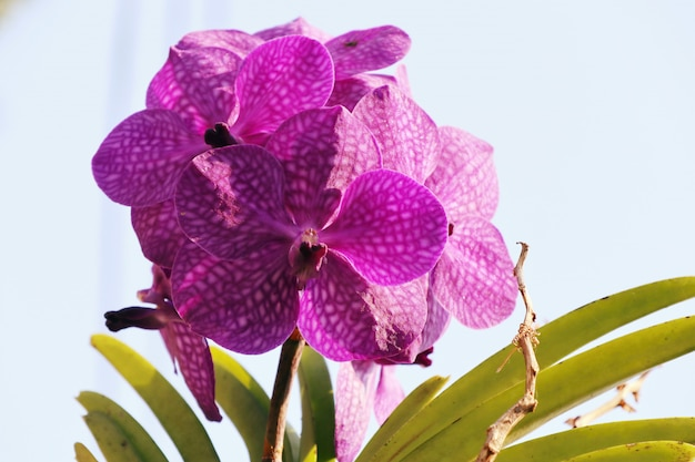 Orchid flower in tropical