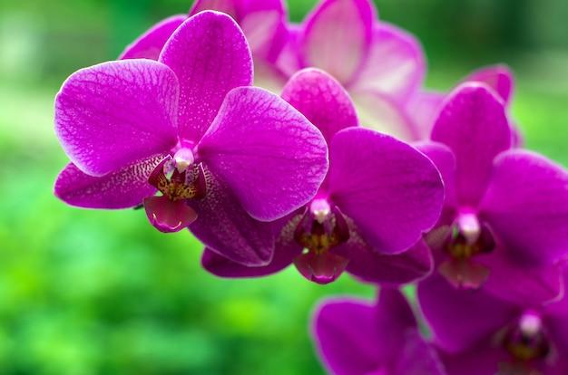 Цветок орхидеи с зеленым фоном