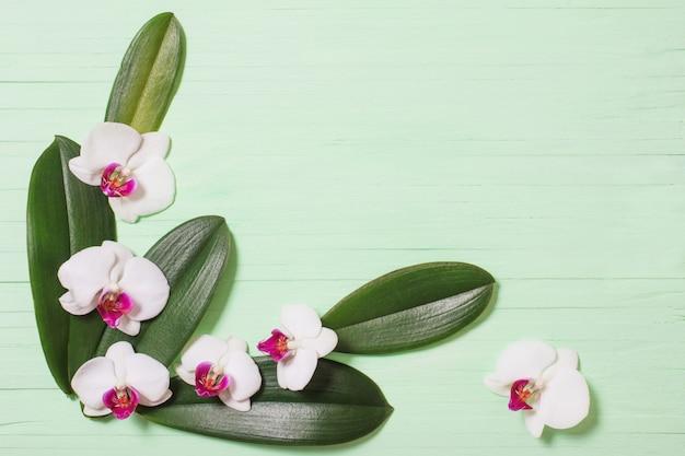 蘭の花と緑の木製の背景にエキゾチックな葉