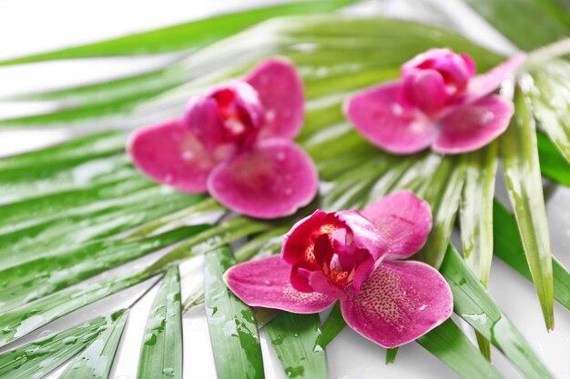 난초 꽃과 종려 잎, 근접 촬영