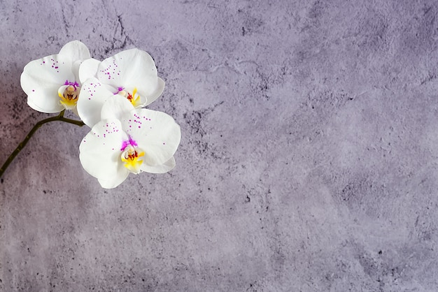 Orchid flowers on a branch against a stucco wall