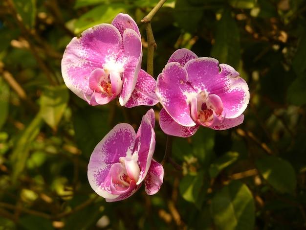 자연 환경에서 난초 꽃 프리미엄 사진