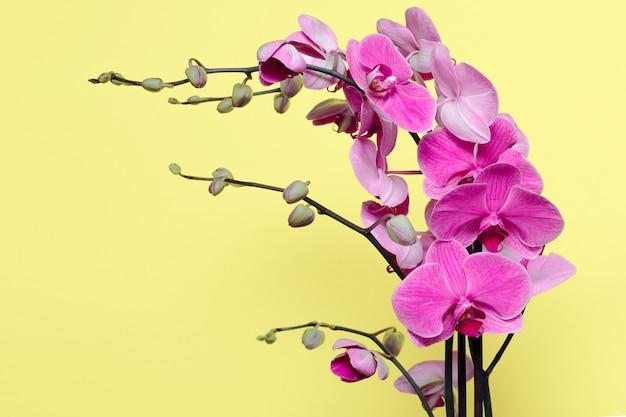 핑크 색상의 난초 꽃