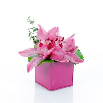 白いスペースに分離された蘭の花