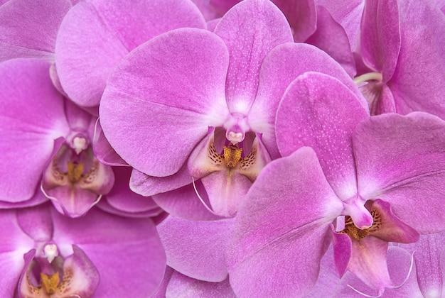 淡いピンク色の蘭の花を背景にクローズアップ