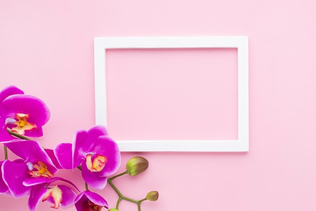 Orchid flowers on a pink copy space background