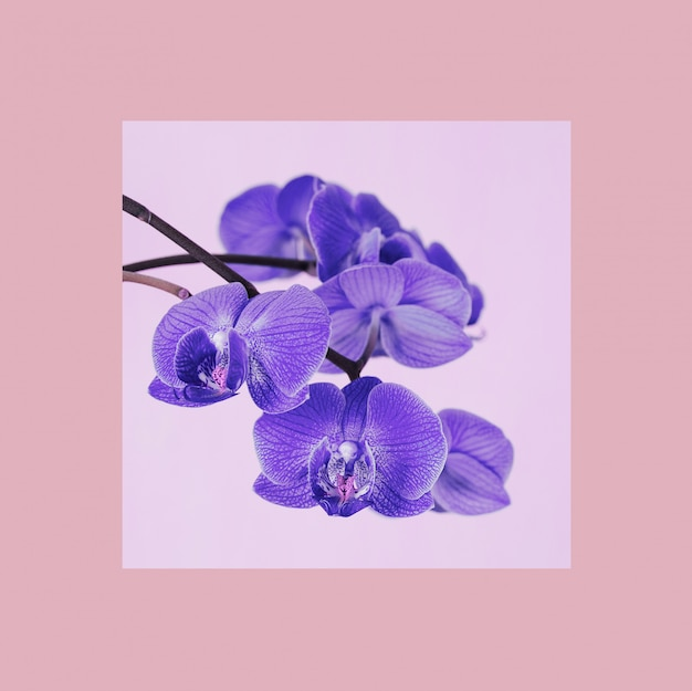 Orchid flowers with a colorful frame