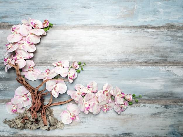 蘭の花ウッドの背景に木の枝、コピースペース