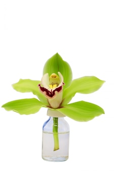 Orchid  glass bottle isolated