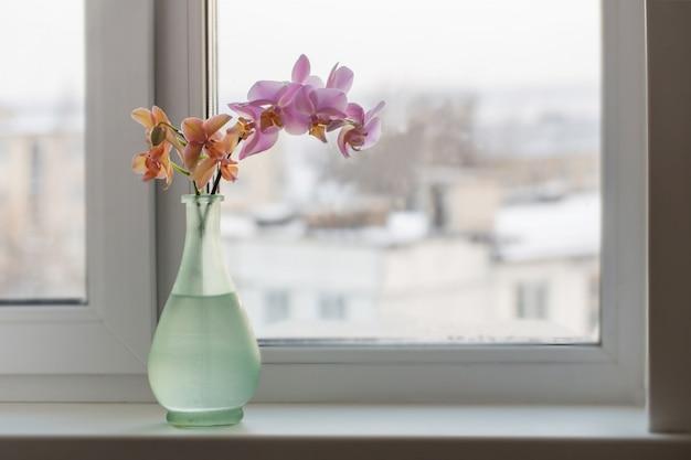 窓辺に緑の花瓶の蘭