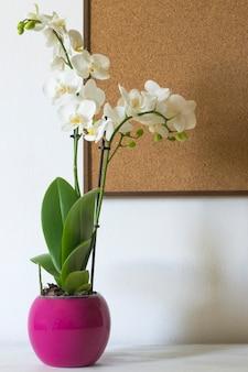 白い背景と木の板に分離された蘭。美しい屋内の花のクローズアップ。贈り物。