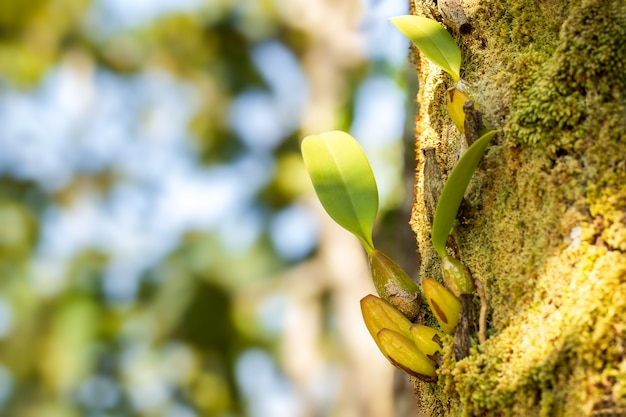 Orchid and moss on the tree in tropical forest.