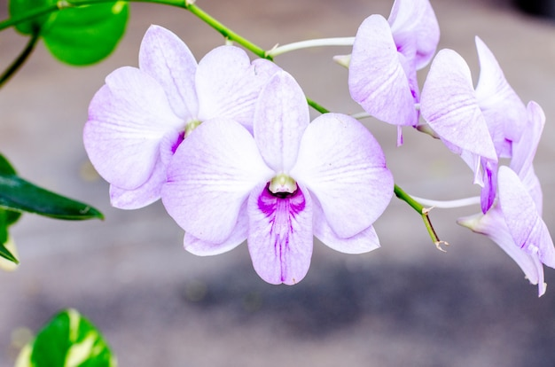 Orchid on nature background