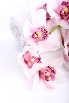 白い背景の上の蘭